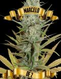 marcelo_de_2