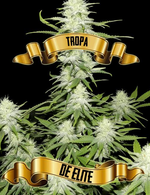 tropaDEelitte